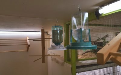 A view from inside the left side aviary after a full clean and overhaul