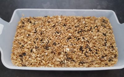 Attention to seed wastage can provide an insight into the preferences of our birds