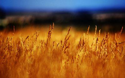 Dry season in Australia | Image by Paul Esson