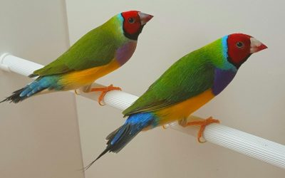 Healthy birds should be largely active and alert like these two