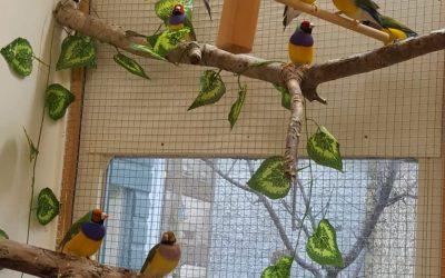 My Gouldian finch aviary