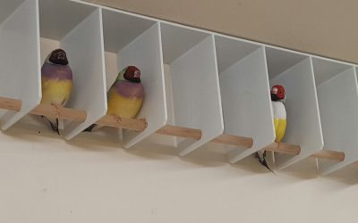 Stress perches provide sanctuary for less dominant birds