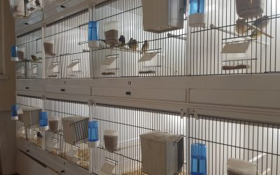 These cages are made from upvc plastic and are very easy to clean