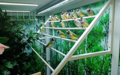 PVC plastic perches and frame